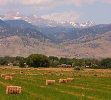 Colorado Hay by Bo Insogna