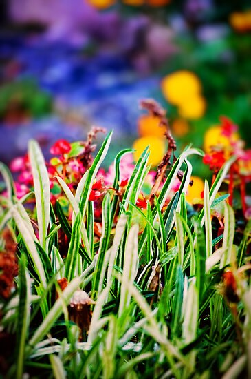 Colorful Grass by Silvia Ganora