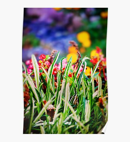 Colorful Grass Poster