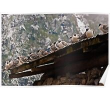 pigeon lineup Poster