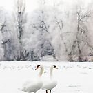 Swan Lake by Lucy Hollis