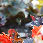 """"""" Coral Reef Spider """" by Richard Couchman"""