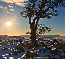 Gnarly tree in a snowy landscape by Shaun Whiteman