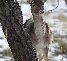 Follow deer in the snow 2 by DutchLumix