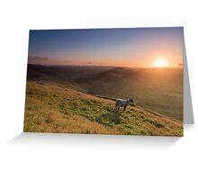 Sunrise of the Lambs Greeting Card