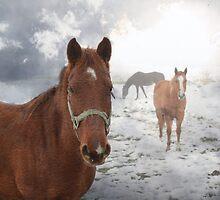 Equine Mist by Bryant Bush