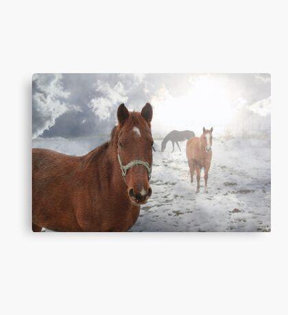 Equine Mist Metal Print