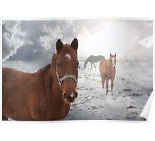 Equine Mist Poster