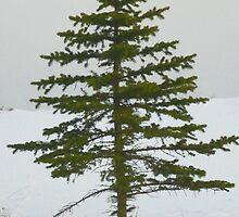 Single Winter Pine Tree by Diane Trummer Sullivan