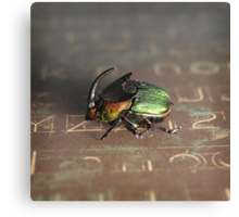 Horned Scarab Canvas Print