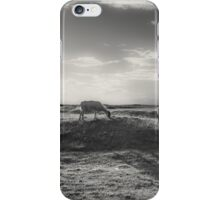 Grazing in the sunlight iPhone Case/Skin