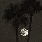 Between The Palms by Chet  King