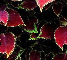 Red & Green by Janie. D