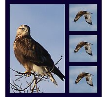 What bird am ? Photographic Print