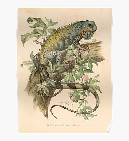 Joseph Fitzinger 1867 0031 Picture Atlas for popular scientific natural history of vertebrates Poster