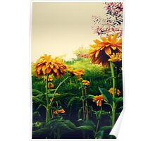 Yellow Flowers in Bloom Poster