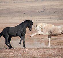 Desert Dance  by Nicole  Markmann Nelson