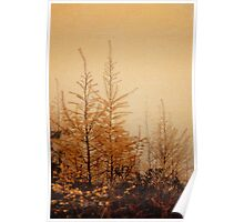 Little Larches Poster