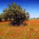 Olive Trees and Poppies by jean-louis bouzou