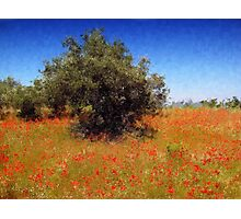 Olive Trees and Poppies Photographic Print
