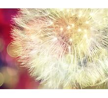 Simple dandelion Photographic Print