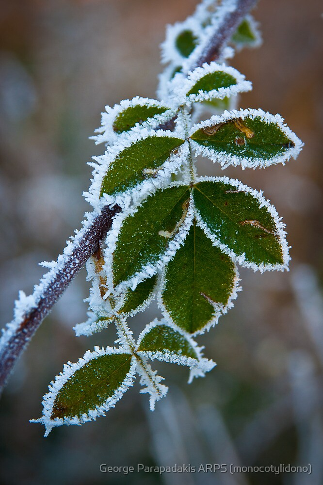 Baby, it's cold outside... by George Parapadakis (monocotylidono)