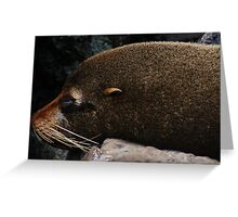 Adorable Galapagos Fur Seal Greeting Card