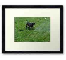 black lab puppy Framed Print