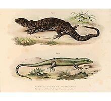 Joseph Fitzinger 1867 0081 Picture Atlas for popular scientific natural history of vertebrates Photographic Print