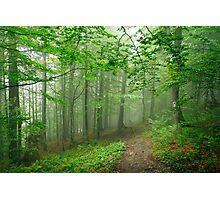 Forest Fog Photographic Print