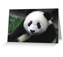 Furry Giant Panda Greeting Card