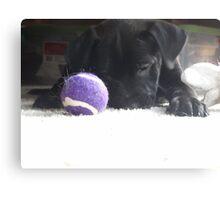 black lab puppy  Canvas Print