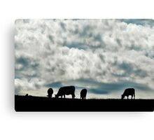 Cows on the field Canvas Print