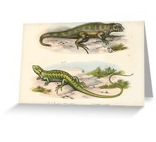Joseph Fitzinger 1867 0041 Picture Atlas for popular scientific natural history of vertebrates Greeting Card