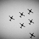 Flying High by Hany  Kamel