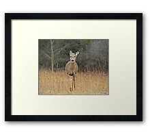 In the Home Stretch  Framed Print