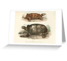 Joseph Fitzinger 1867 0161 Picture Atlas for popular scientific natural history of vertebrates Greeting Card