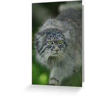 Cute Pallas Cat Greeting Card