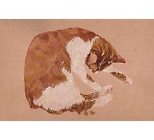 round cat Photographic Print