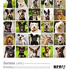 Best Friends Rescue 2011 by BFRQLD