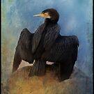 Great Cormorant     Phalacrocorax carbo by Bandicoot