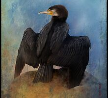 Great Cormorant     Phalacrocorax carbo by Bandicoot