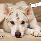 Zoya :: by Wet Nose Fotos by BFRQLD