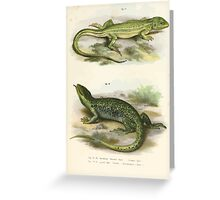 Joseph Fitzinger 1867 0063 Picture Atlas for popular scientific natural history of vertebrates Greeting Card