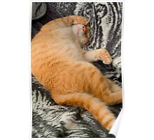 """""""Purrfect Dreams"""" -  a cat spralled out sleeping Poster"""