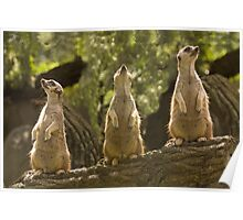 """""""Home Security System"""" - meerkats keep a lookout Poster"""