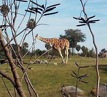 Giraffe by tessanicole
