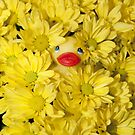 """Mums The Word"" - rubber ducky hiding in the flowers by John Hartung"
