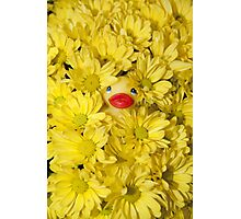 """""""Mums The Word"""" - rubber ducky hiding in the flowers Photographic Print"""