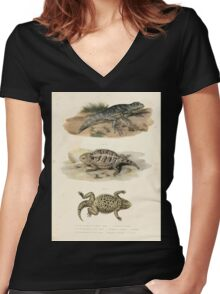 Joseph Fitzinger 1867 0043 Picture Atlas for popular scientific natural history of vertebrates Women's Fitted V-Neck T-Shirt